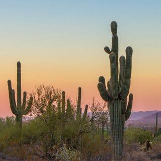 Arizona Inspiration: Phoenix/Scottsdale