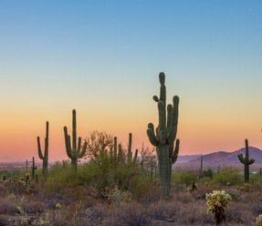 Phoenix Scottsdale