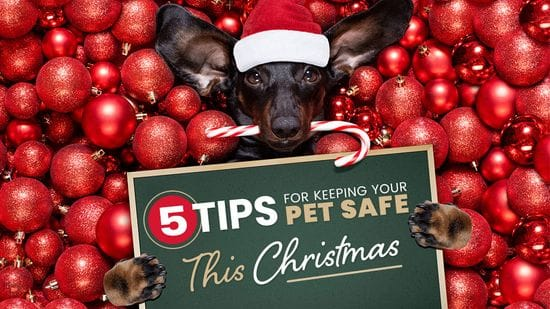 5 Tips For Keeping Your Pet Safe This Christmas
