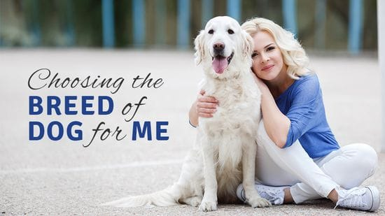 How Do I Choose the Right Breed of Dog for Me?