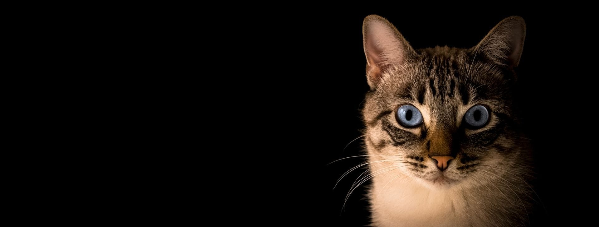 Cat Specialist Services | Specialist veterinary care just for cats