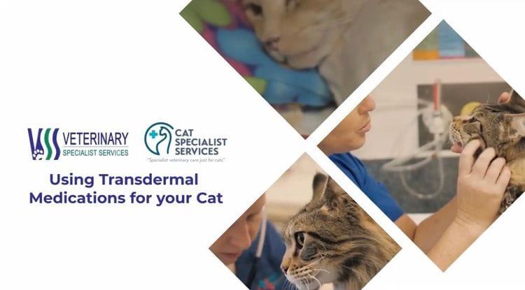 Transdermal Medications for your Cat