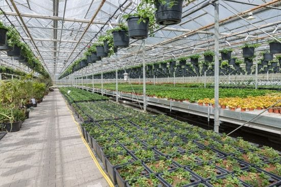 What is the Ideal Greenhouse Temperature?