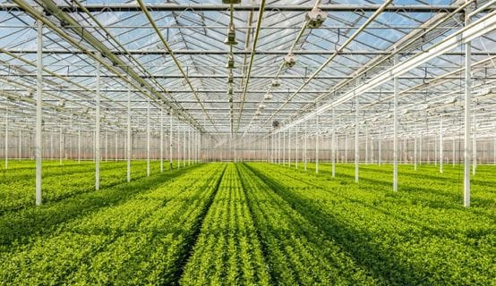 3 Cost-Saving Greenhouse Heaters To Consider