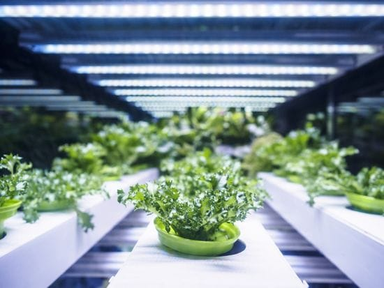 Everything You Need to Know About Soilless Growing