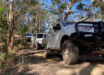 Day Tour of Ourimbah State Forest