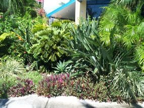 Tropical Garden Design On Plan To Plant Horticultural Services Styles