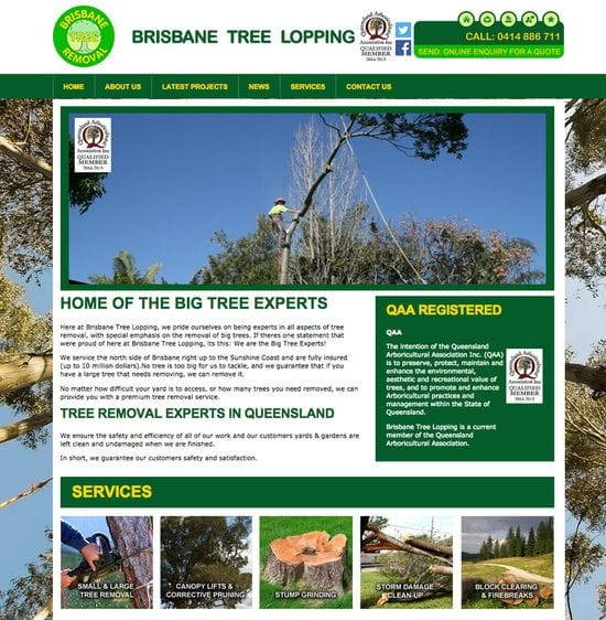 Big Tree Experts