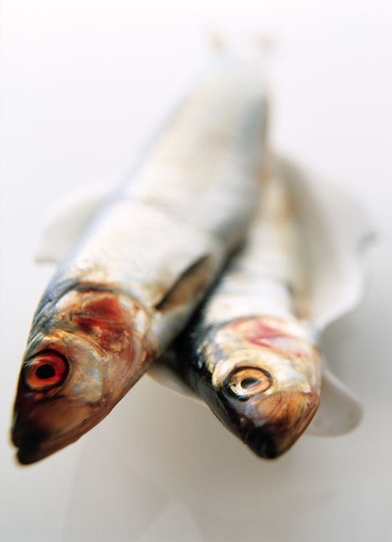 Application of enzymes in fish rendering.