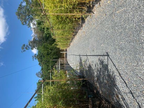 Bamboo Nursery Project