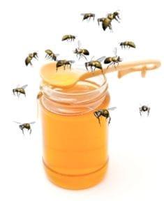 Bees to Honeypot
