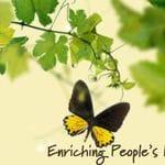 Eden Gardens + Swane's Nursery Tour