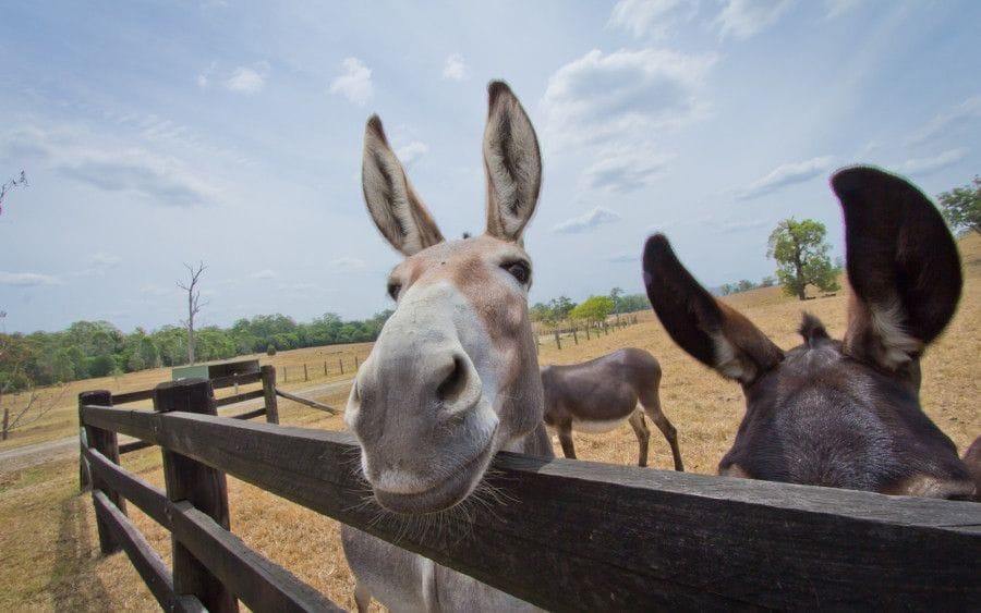 Connect Coaches Good Samaritan Donkey Tour Click Here