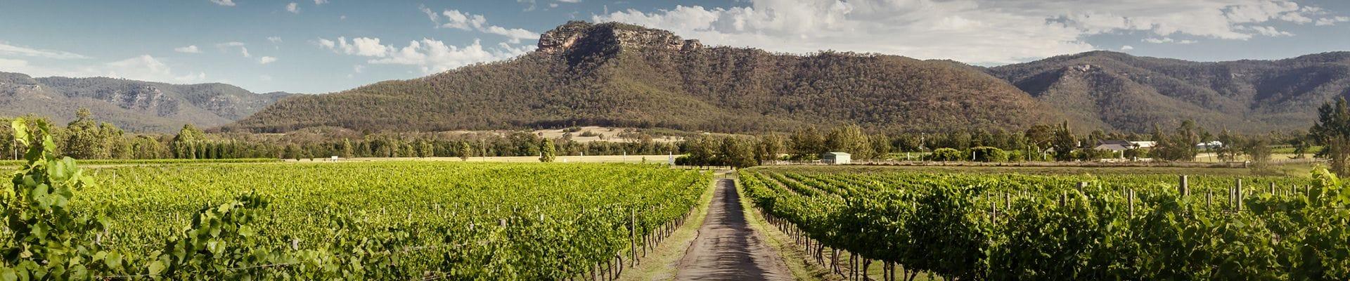 Pokolbin Hire Cars Hunter Valley Wine Tours