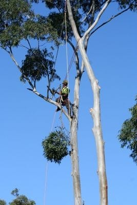 arbor, tree removal, tree care