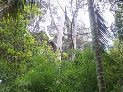 tree service, tree lopping, aborist