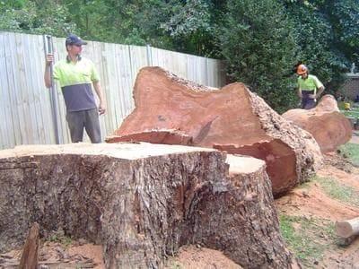 stump grinding, root pruning