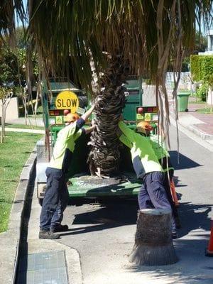 crane work, tree removal