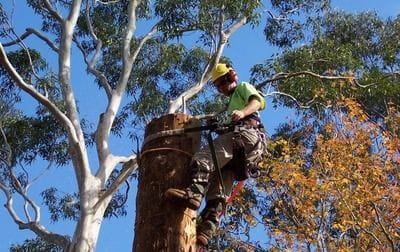 tree removal, tree pruning, emergency tree removal