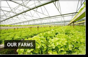 Our Farms