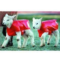 Bainbridge Lamb Blanket - Pk of 50