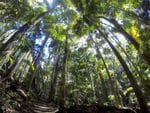 Mt Warning Rain Forest Park, Tweed Valley