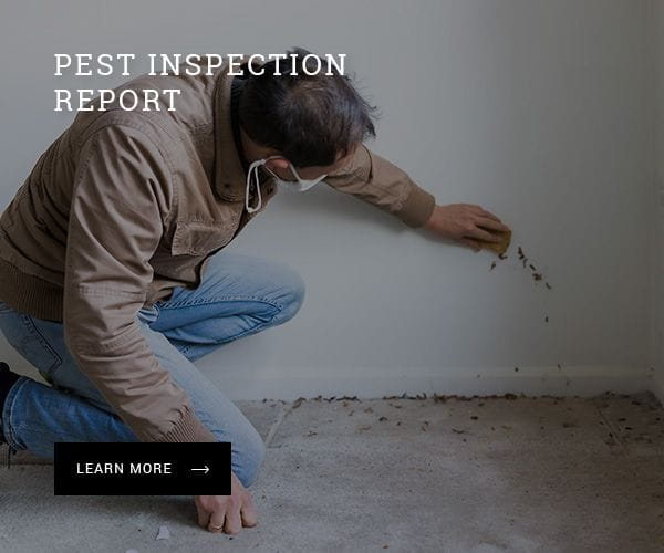 Pest inspection report in Port Macquarie