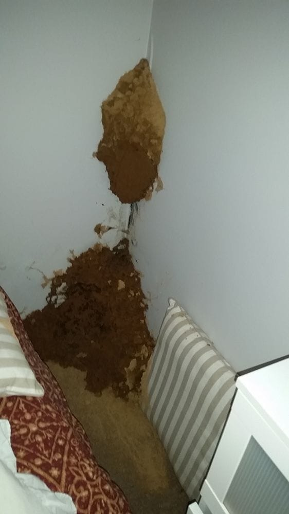 Termite Treatment Gold Coast