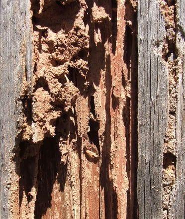 Termites Pest Control Gold Coast