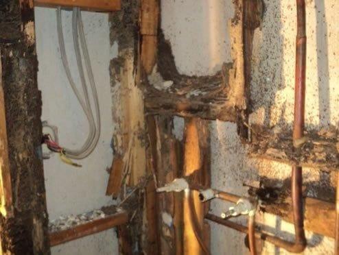 Termite Damage Optimum Pest Control