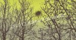 Trees in Brown and Chartreuse - Karen Foenander