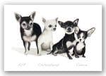 Chihuahuas - Valerie