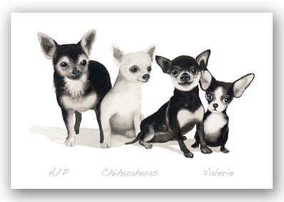 Chihuahuas - Valerie