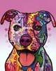 Thumbnail Staffordshire Terrier 115409