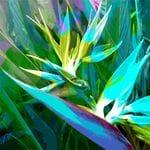 Bird of Paradise Blue - Jan Neil