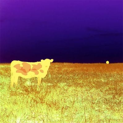 I love Cows Purple and Gold by Jan Neil