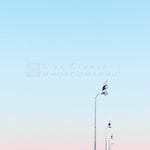 First Light - Liza Clements