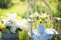 How to care for your garden in the summer