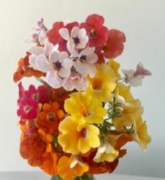 Spring flowers to brighten up the Spring garden