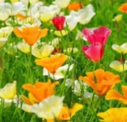 Bright orange, cream and crimson flowers for summer clolour