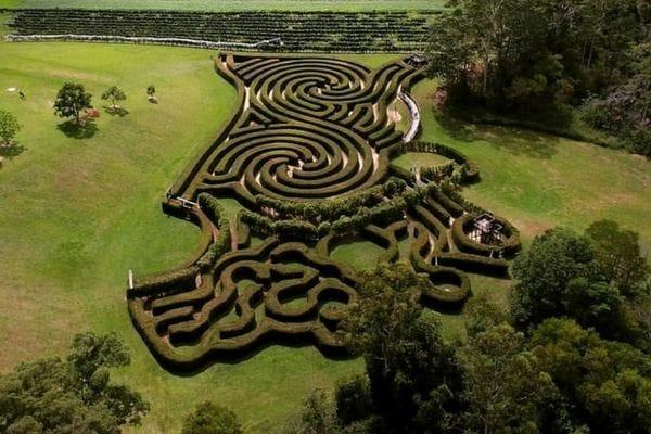 Bago-Maze