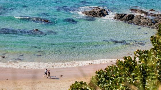 Nobbys Beach Port Macquarie - Dog Friendly