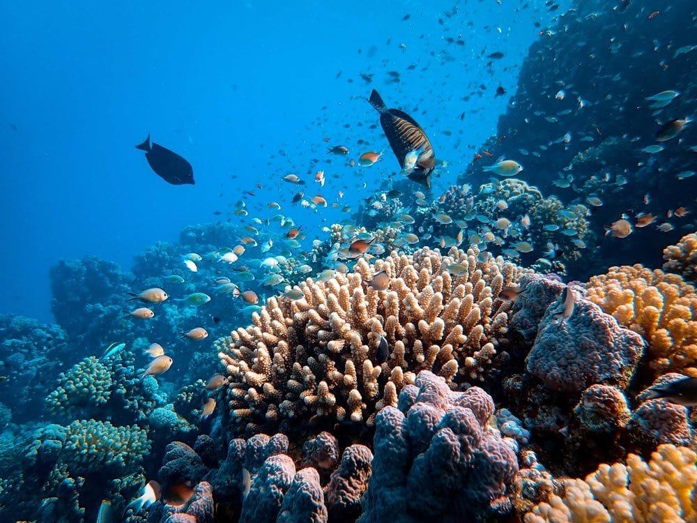 Orpheus Island, Great Barrier Reef