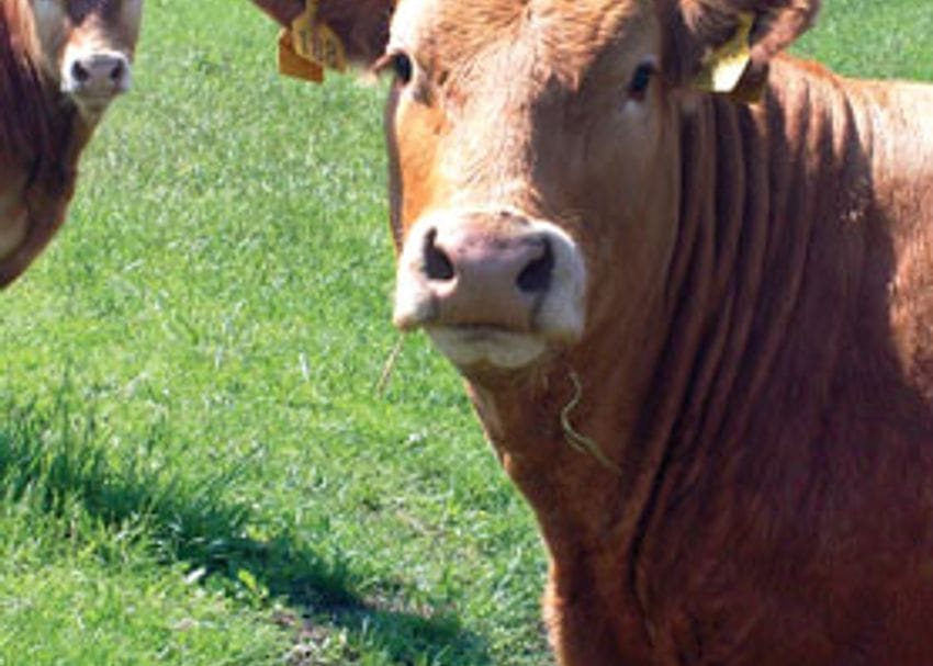 GILLARD BOWS TO INDUSTRY PRESSURE OVER LIVE EXPORT