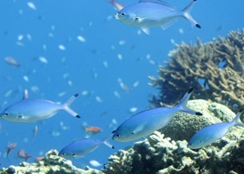 HOW HAHN GROUP CAN SAVE THE REEF