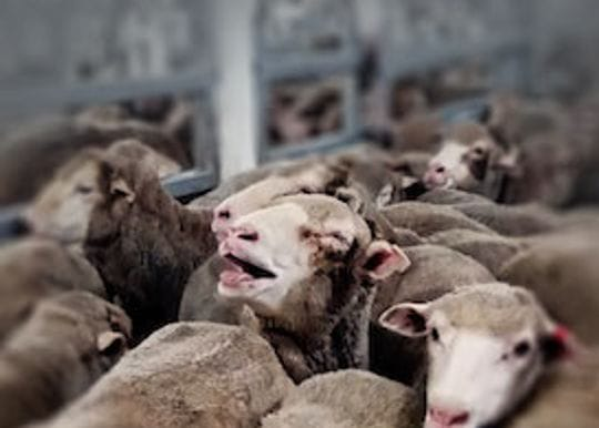 There is little to be proud of in the wake of the live export controversy