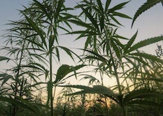 Elixinol is the latest Australian cannabis company to list on US stock exchange