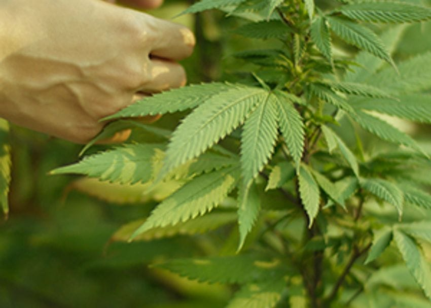 Aussie cannabis company on the verge of milestone deal with Israel