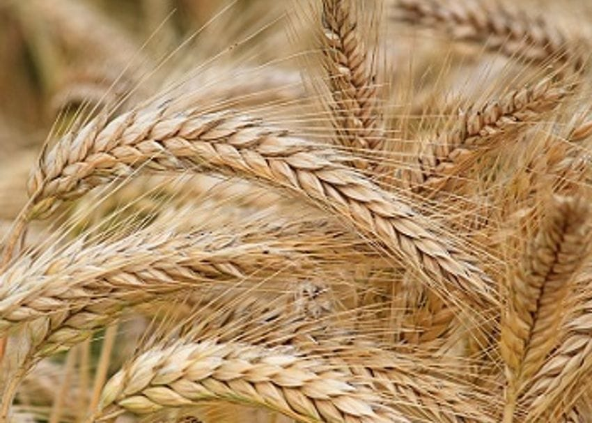 GrainCorp receives $2.4b takeover offer