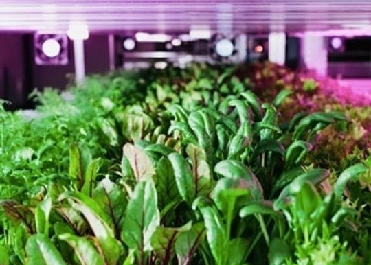Stacked Farm, Australia's first fully robotic end-to-end vertical farm